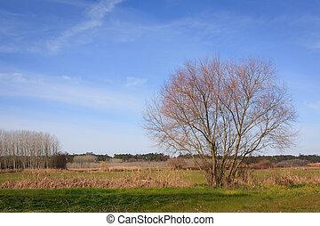 cielo azul, encima, verde, llanura, campo, y, bosque, en,...