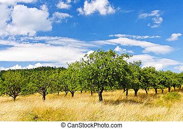 cielo azul, huerto, manzana