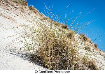 cielo blu, dune, sabbia, alto, bianco, erba