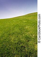cielo blu, e, erba