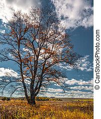 cielo blu, el, autunno, albero, mari, campo, solo, russia
