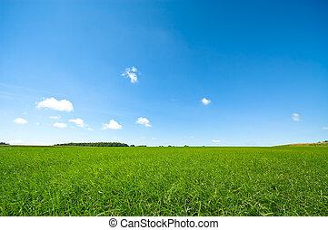 cielo blu, luminoso, verde, fresco, erba