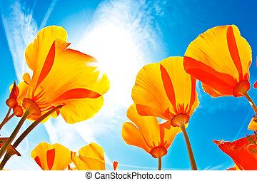cielo blu, macro, campo, fiori, vista