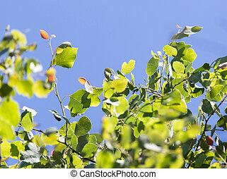 cielo blu, rami, contro, albero