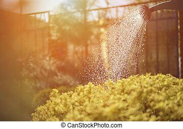 cielo, chiudere, giorno, garden., cespuglio, su, blu, annaffiatoio, verde, giardinaggio, fence., soleggiato, care., innaffiato, pomeriggio