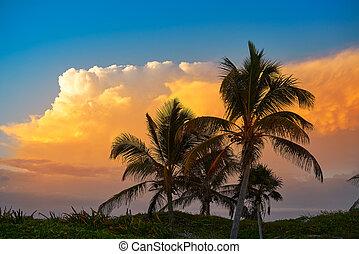 cielo de puesta de sol, palma de coco, árboles, en, caribe