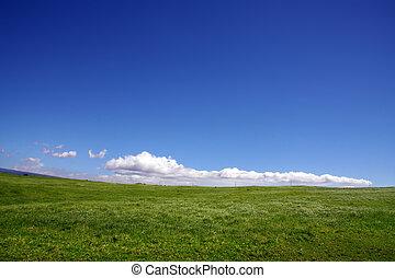 cielo, e, erba