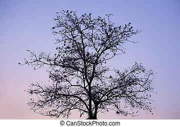 cielo, evening., silhouette, alberi morti