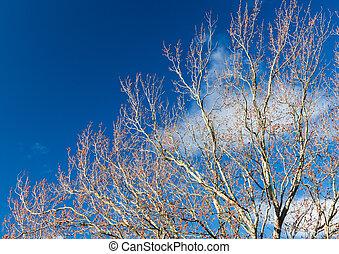 cielo, invierno de árbol