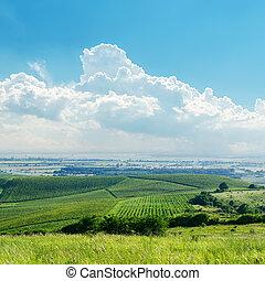 cielo nublado, encima, verde, viña