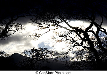 cielo oscuro, silhouetted, bosque