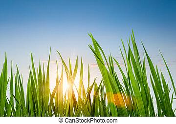 cielo, pasto o césped, verde, anochecer