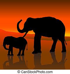 cielo, rosso, elefanti
