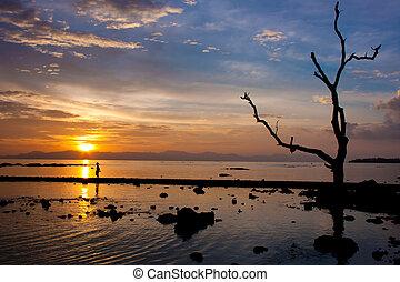 cielo, silhouette, albero, colorito, sunset.