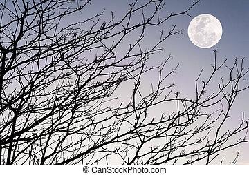 cielo, silhouette, tramonto, ramo albero