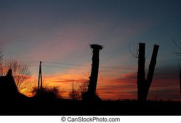 cielo, tramonto