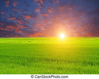 cielo verde, risaia