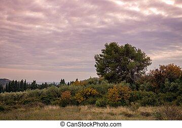 cielo viola, sopra, solitario, albero