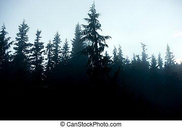 ciemne tło, las