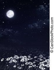ciemny, biały, margerytki, noc