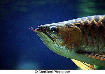 ciemny, fish, tło