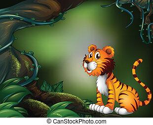 ciemny, tiger, las