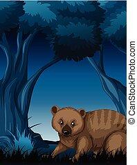 ciemny, wombat, las