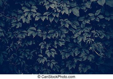 ciemny, wspinaczkowy, roślina