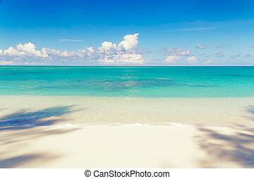 cienie, lato, wyspa, drzewo, słoneczny, mahe, tropikalny, dłoń, seychelles, plaża, dzień, piaszczysty