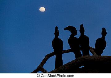 cienie, od, ptaszki
