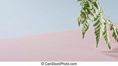 cienie, różowy, 1080p., liście, pełny, błękitny, gładki, ...