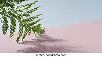 cienie, różowy, 1080p., liście, pełny, błękitny, gładki, paproć, tło., dotykanie, powolny, zielony, 240fps, gałąź, video, branch., duotone, hd, ruch