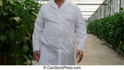 científico, examinar, plantas, invernadero, 4k