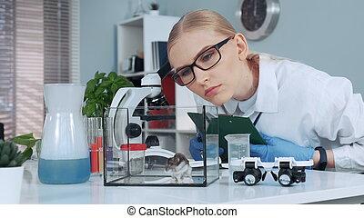 científico, hembra, comportamiento, investigación, ...