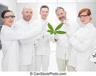 cientistas, segurando, um, geneticamente modificado, folha