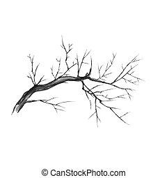 cierre, aislado, descubierto, arriba, silueta, rama, vector, branch., illustration., graphics., seco