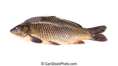 cierre, carpa, arriba, fish.