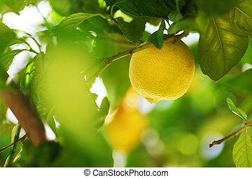 cierre, limón, arriba