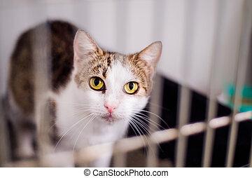 cierre, poco, jaula, arriba, gato