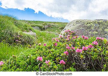cierre, rododendro, arbusto, arriba
