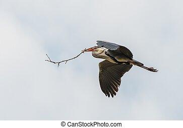 cigüeña, vuelo, con, rama, en, el suyo, pico