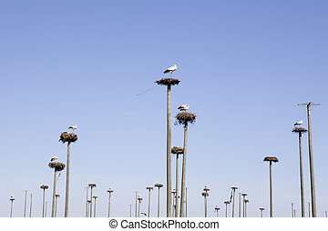 cigüeñas, colonia