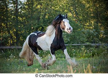 cigana, andar cavalo