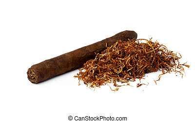 Cigar and bunch of dry tobacco leaves isolated on white