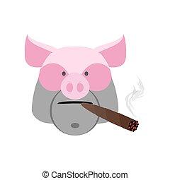 cigar., arrabbiato, isolato, maiale, verro, aggressivo