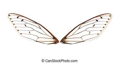 cigarra, wings.