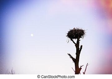 cigogne, sommet, arbre, nid