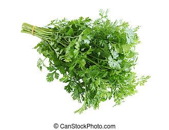 Cilantro - Bunch of fresh cilantro isolated on white...