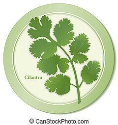 Cilantro Herb Icon - Cilantro herb icon, aromatic leaves ...