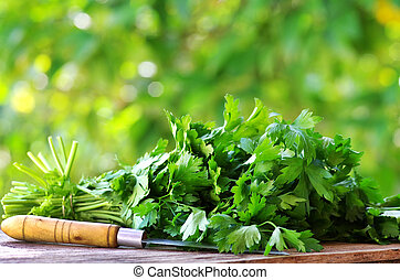 Cilantro herbs and knife.